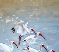ibises in the water