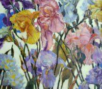 multi color irises