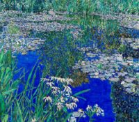 water lilies in blue pond
