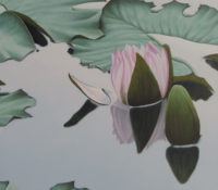 pink lily in pond