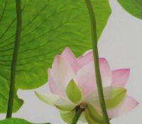 punk lotus