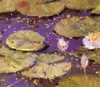 water lilies purple water